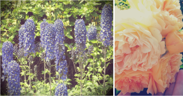 Rose & Delphiniums